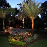 backyard garden lit with LED lights