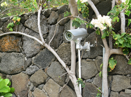 Landscape Lighting and Security Cameras